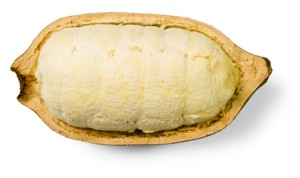 Le Cupuaçu bio superfruit antioxydant