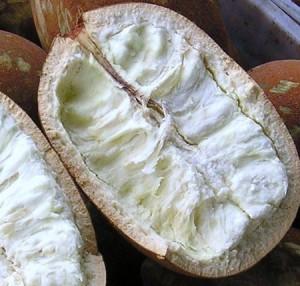 le cupuaçu superfruit antioxydant puissant